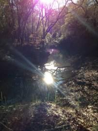 2017 creek sunshie