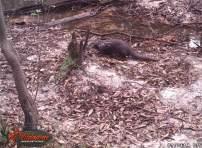 2018 creek otter